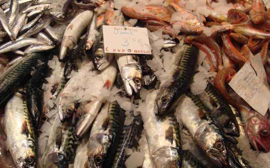 Verat, el peix blau del confinament