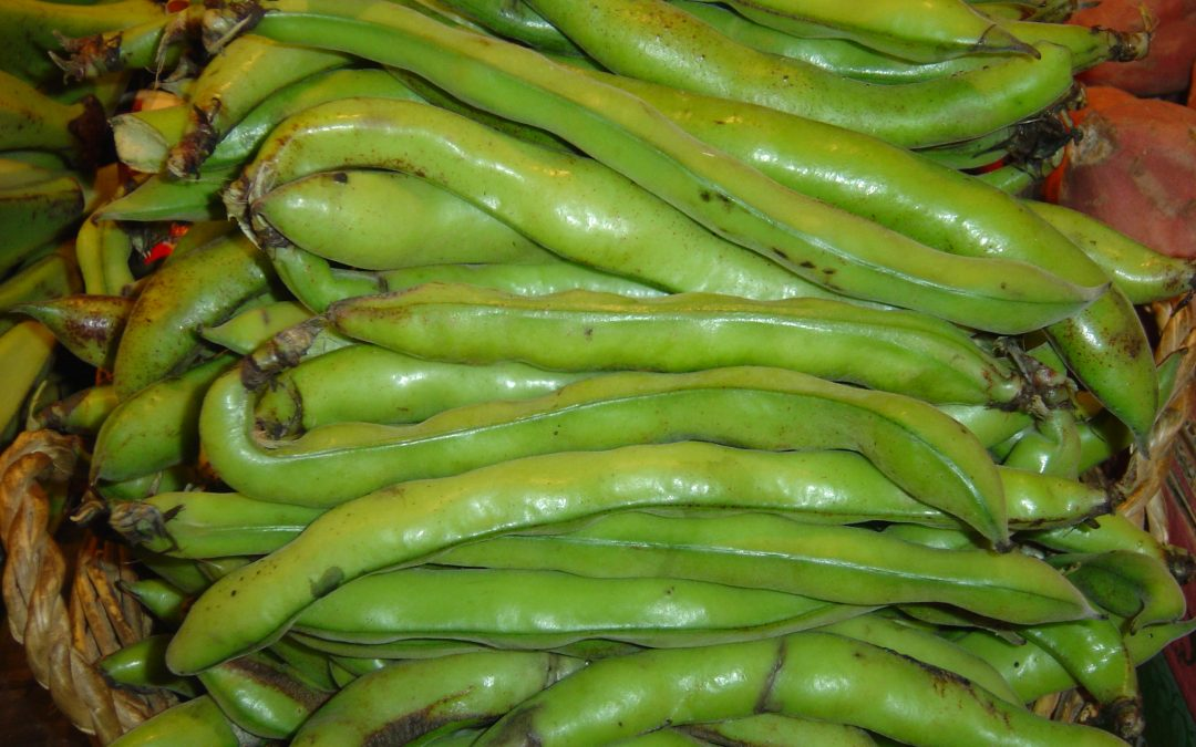 Aliments de temporada: la fava i el pèsol