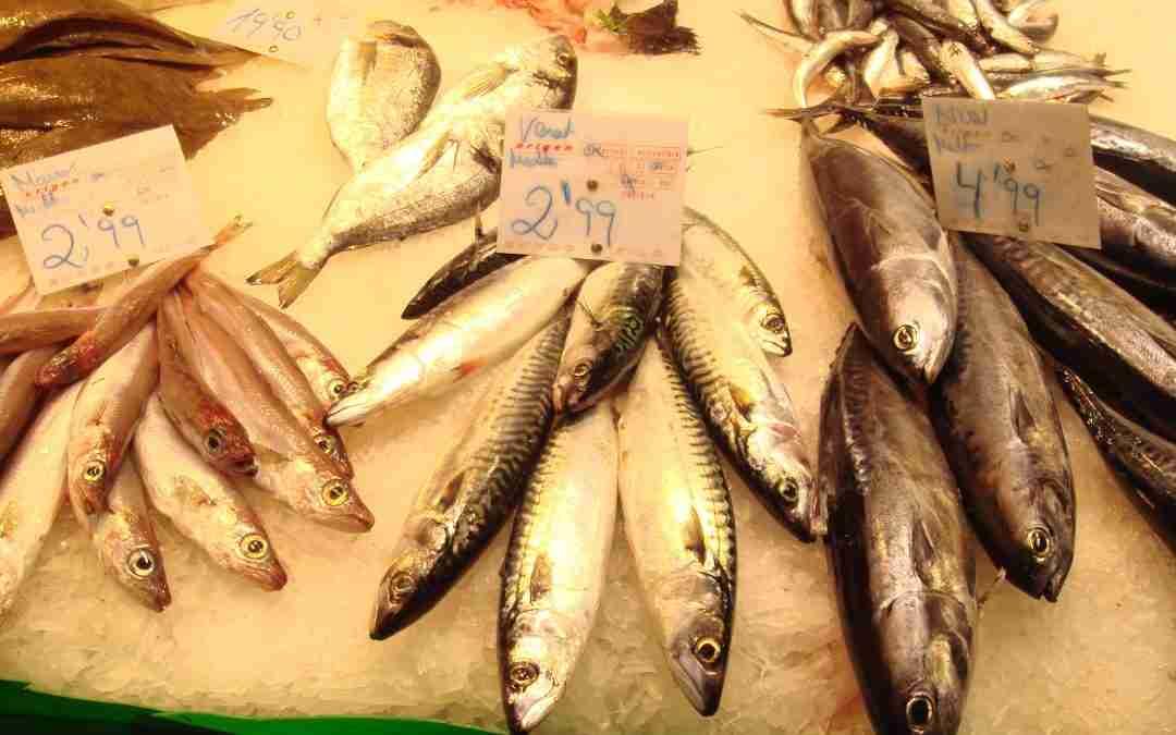 El valor del peix blau