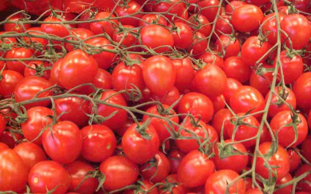 Els 5 aliments top de l'estiu: el tomàquet